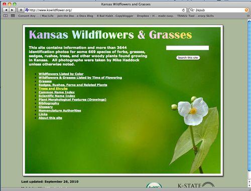 KSWildgrass