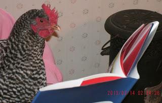 Closeup hen reading